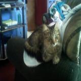 Avatar de kittycatswell