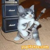 Avatar de ibee.rock